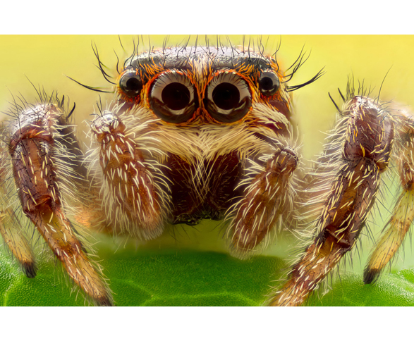 Image result for creepy crawly